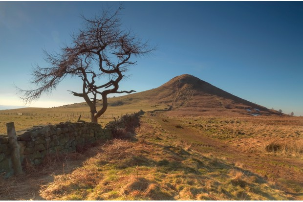 Lone tree at Roseberry Topping.