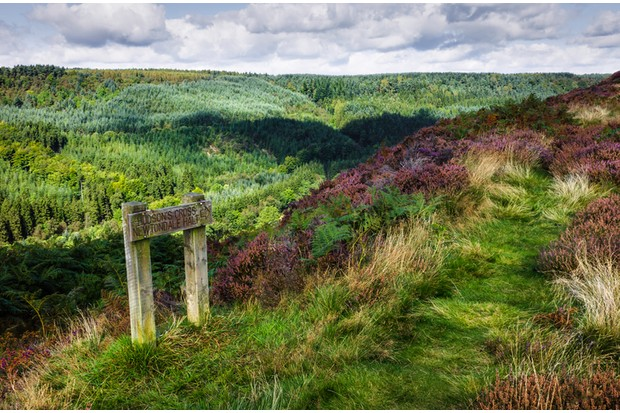 """""""Walkway across the North York Moors near the small English village of Levisham. The wooden sign in this photo points in the direction of Netondale Halt, a small station on the route of the vintage steam train service between Pickering and Grosmont. The shot also shows heather is bloom and woodland in this beautiful undulating landscape. The shot was taken during late summer season."""""""