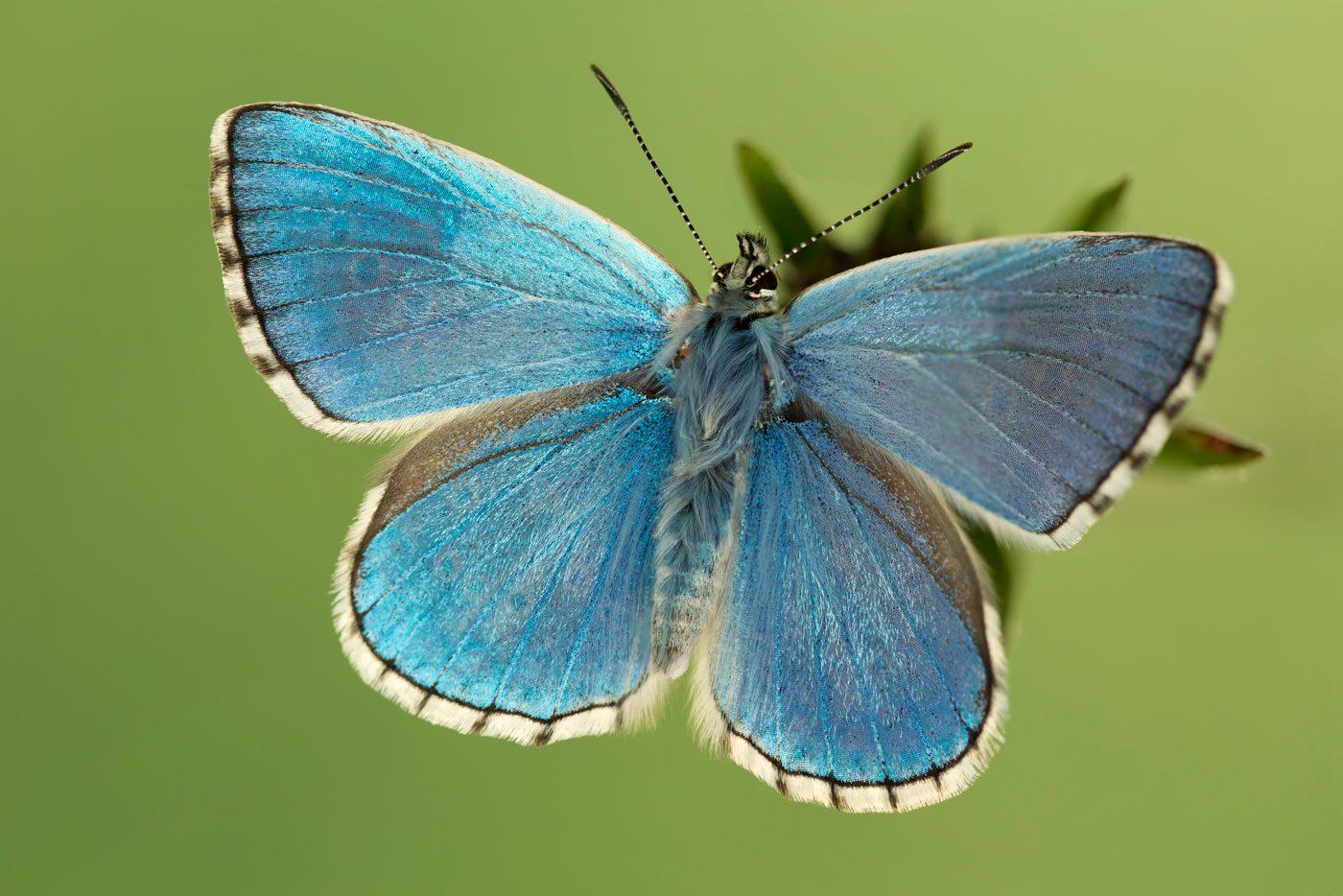 Butterflies of Britain /& Europe Green Guide