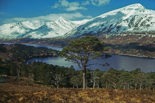 Scots Pine above Loch Affric provides the foreground to the great Peaks of Mam Sodhail and Carn Eige in the North West Highlands of Scotland.