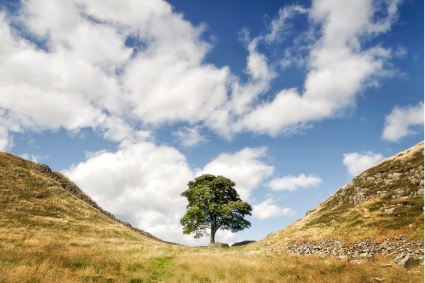 One of the most famous points on Hadrian's Wall is Sycamore Gap, where a beautiful sycamore tree has withstood the rigours of the Northumberland weather for many years. On either side of the gap, the wall climbs steeply up the crest of the Whin Sill, a tabular layer of  igneous dolerite rock in the north east of England. This was once the most heavily fortified border in the Roman Empire, and dates from AD 122, during the rule of the emperor Hadrian. The wall was made a UNESCO World Heritage Site in 1987.