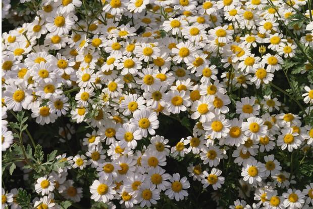 GettyImages-182132997_2-cdceaec
