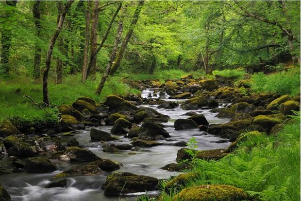 The Afon Artro is 4.5 miles long