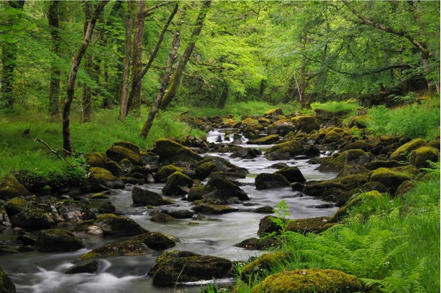 The Afon Artro is 4.5 miles long