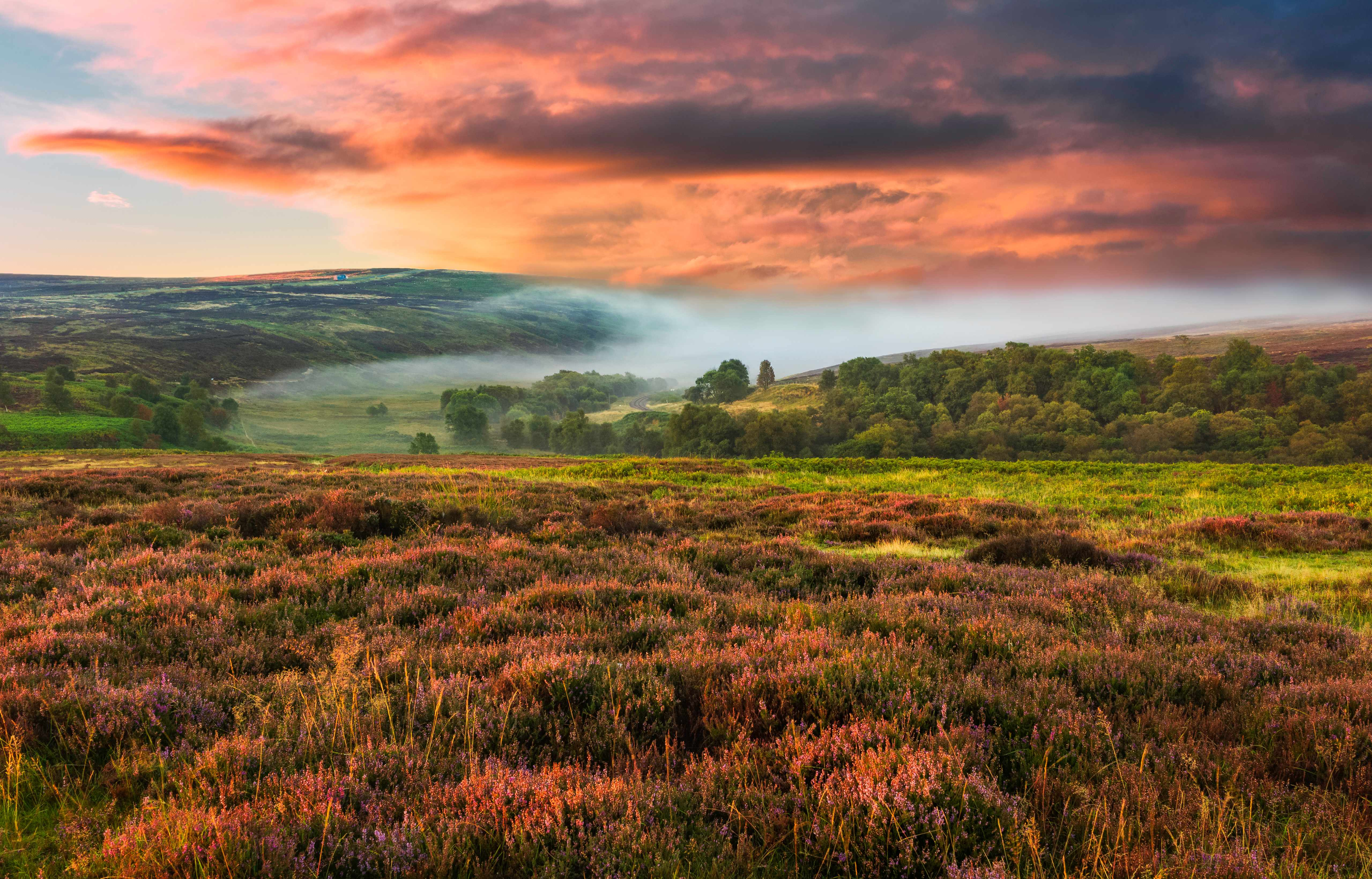 Dawn mist over the North York Moors national park shot in autumn (fall) when the heather is in full bloom near the village of Goathland, north Yorkshire, UK.