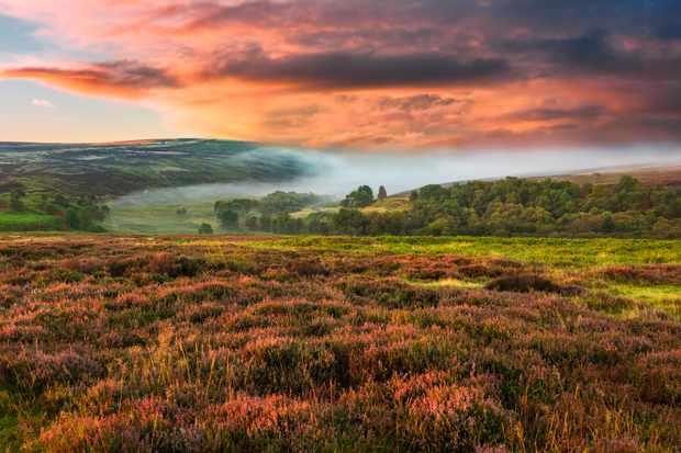 Dawn mist over the North York Moors National Park