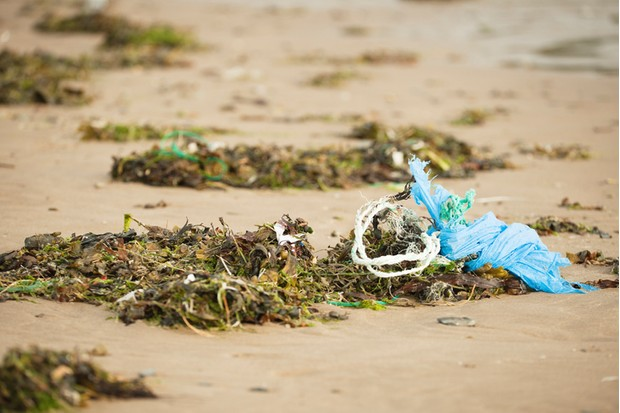 """A plastic bag, rope, sweet wrapper and other litter entangled in seaweed. Croyde Devon UK"""