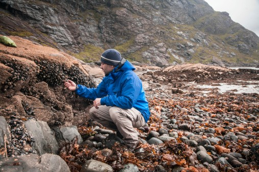 MAN PICKS FRESH MUSSELS OFF THE ROCKS IN SCOTLAND