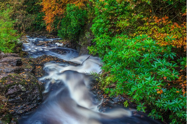 Small river in the autumn forest. Location: Glenariff forest park (Glenriff river), County Antrim, Northern Ireland, UK