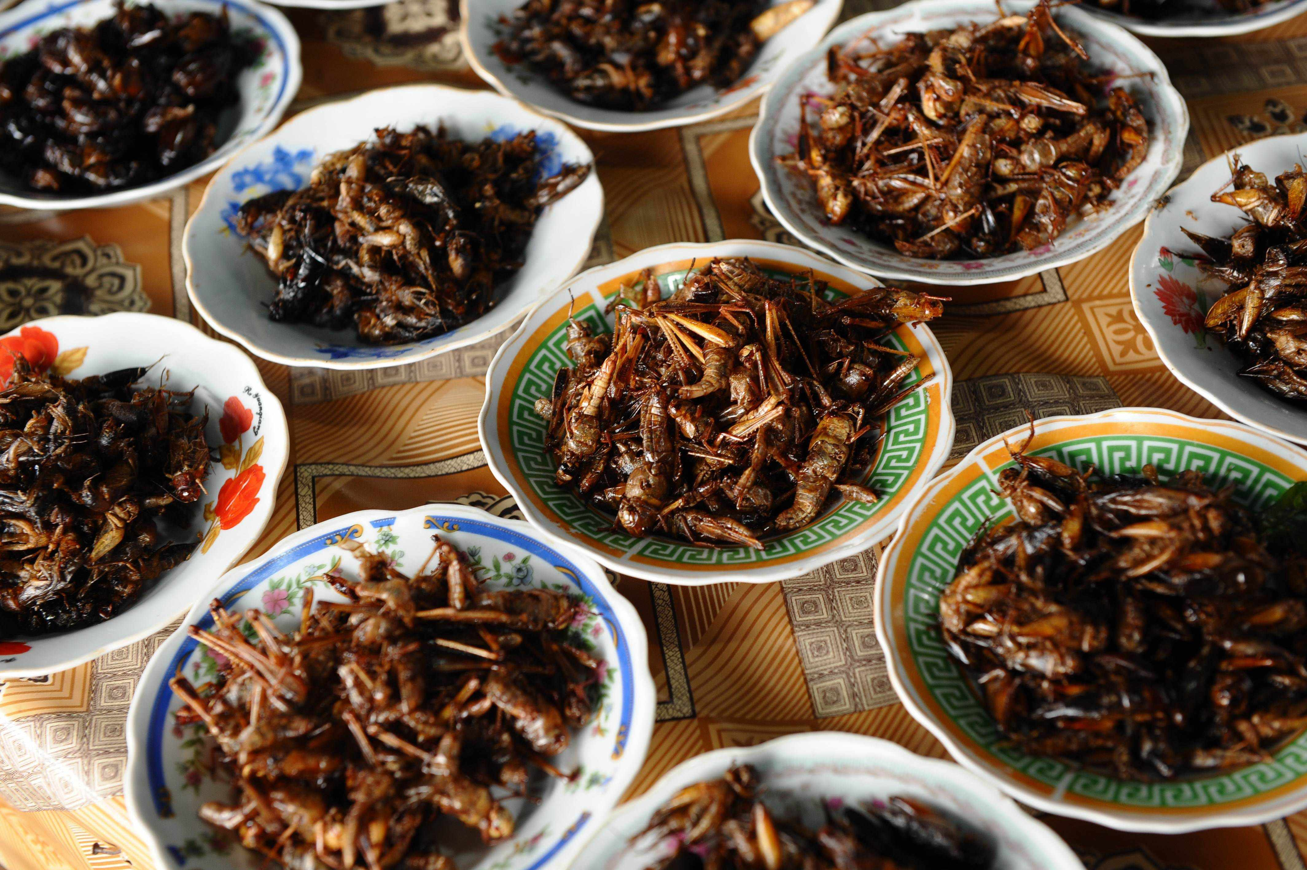 This picture taken on March 15, 2011 shows plates of fried insects, including crickets and grasshoppers, for sale at a local market in Vientiane.      AFP PHOTO / HOANG DINH Nam        (Photo credit should read HOANG DINH NAM/AFP/Getty Images)