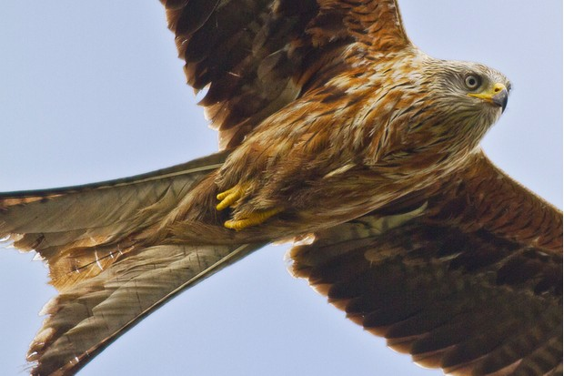 Red kites can be seen flying above the river