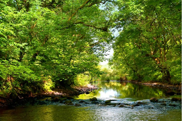 A woodland landscape of trees and river in the early morning light with the use of colour saturation in sunlight and shadow. Taken in the month of June at Cree wood in the southwest of Scotland.