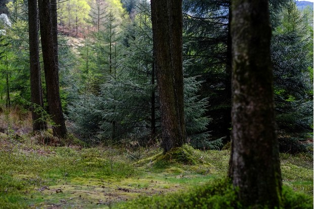 Grizedale Forest, Cumbria, The Lake District, UK - 2015 - Grizedale Forest in all its beautiful greenery.