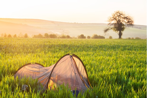 Camping tent in fresh wheat fields at sunrise
