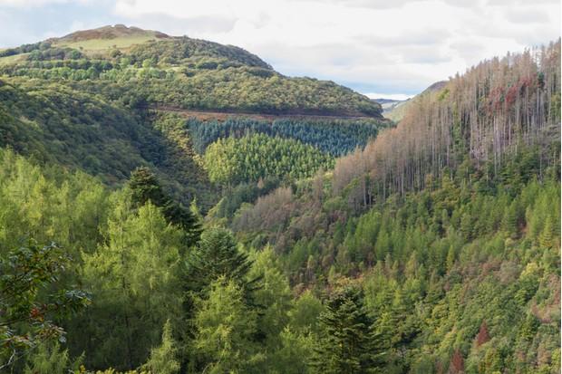 Wooded tree lined valley of river Afon Rheidol,  Pontarfynach, Hafod estate, Ceredigion, Wales, United Kingdom, Europe.