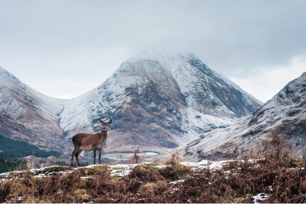 Lone deer in Glen Etive, Scotland, with Buachaille Etive Mor in the background