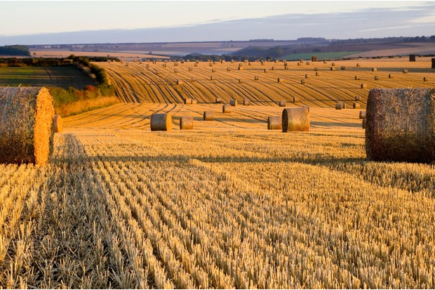 Straw Bales on the East Yorkshire Wolds at dawn