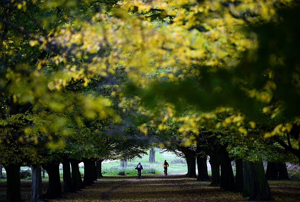 Two cyclists pedal through an avenue of trees in Richmond Park on October 23, 2015 in London.  AFP PHOTO / FRANCK FIFE        (Photo credit should read FRANCK FIFE/AFP/Getty Images)