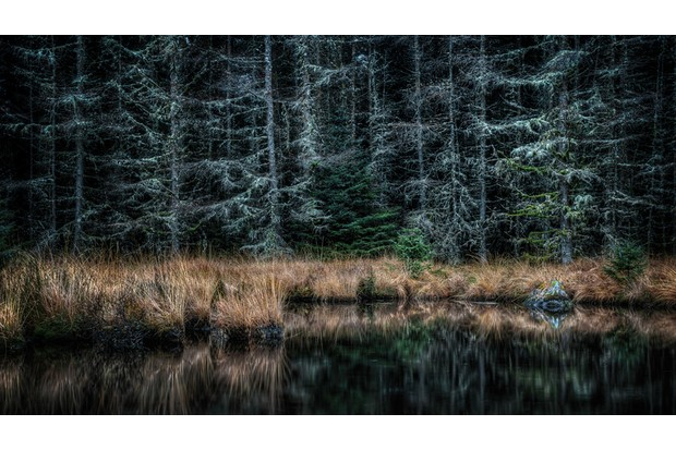 The dark fir trees in Galloway Forest Park, reflected in loch waters, southern Scotland.