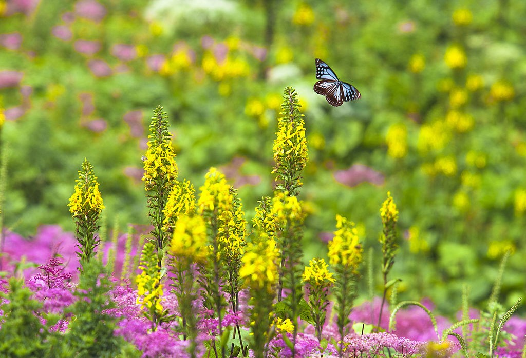 Japan, Kinki Region, Shiga Prefecture, Maibara, View of flower garden in butterfly. (Photo by: JTB Photo/UIG via Getty Images)