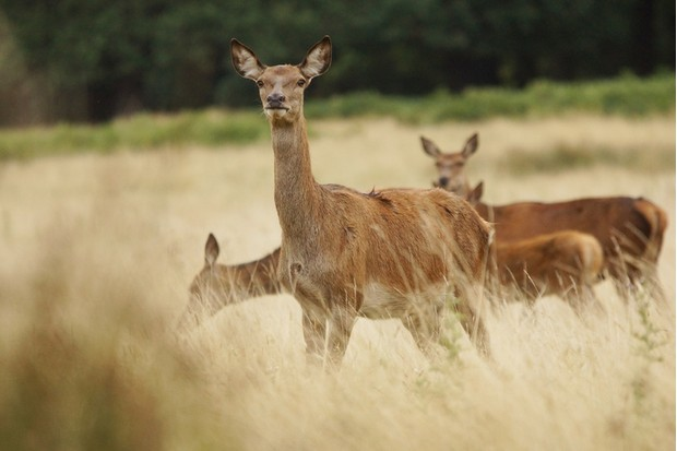 Spot wildlife at Dunster Deer Park