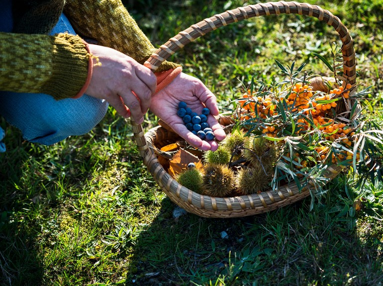 Best foraging courses in the UK