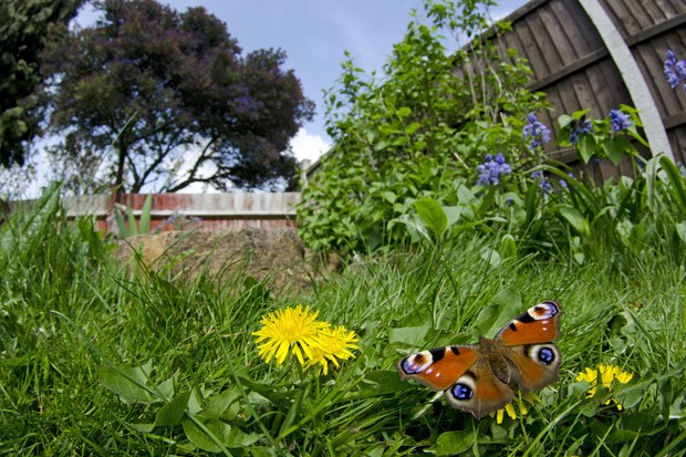 Image result for insects in the garden