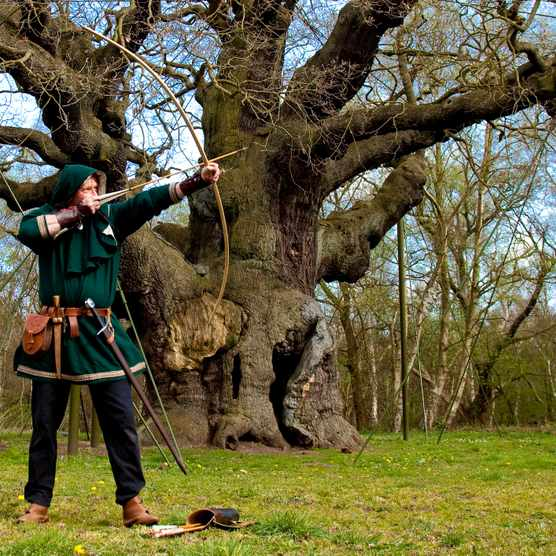 Nottinghamshire, UK. Robin Hood stretches his long bow at the ancient Major Oak in sherwood forest.