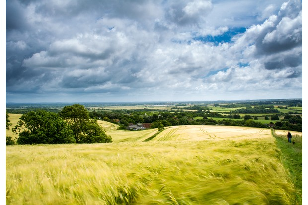 Walking the dog on a windy day up to mount caburn Lewes east sussex