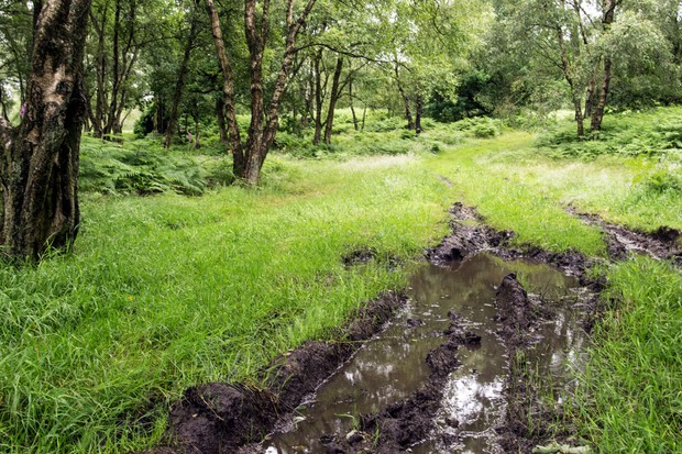 Muddy puddle in a woodland