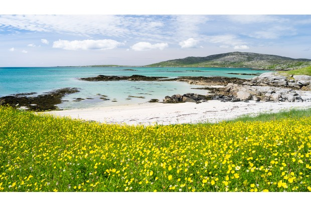 Erisksay island, located at the southern tip of South Uist in the Outer Hebrides.Machair, gaelic for a fertile, often sandy, sometimes farmed or grazed coastal plain. It is typical for the outer hebrides and famous for its lush wildflowers. Europe, Scotland, June