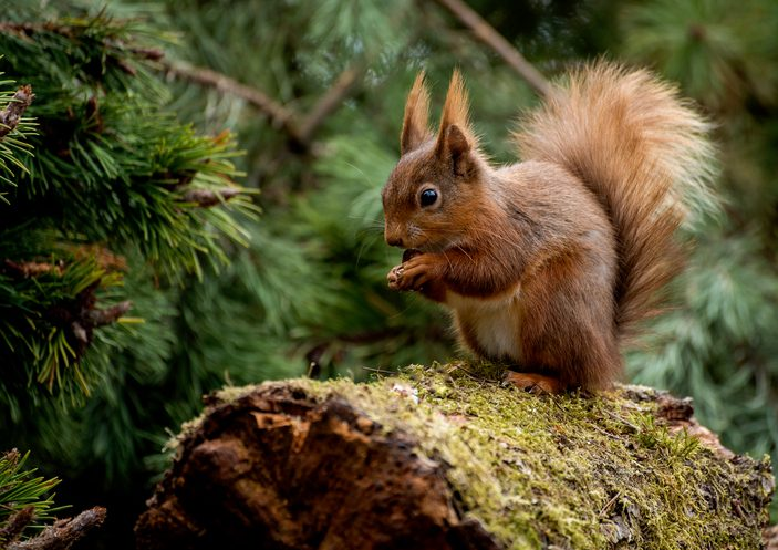 Image of: Www 10 Of The Most Endangered Animal Species In Britain Countryfilecom 10 Of The Most Endangered Animal Species In Britain Countryfilecom