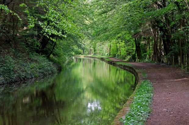 A shot of a canal and tow path with spring colour reflections in the canal.