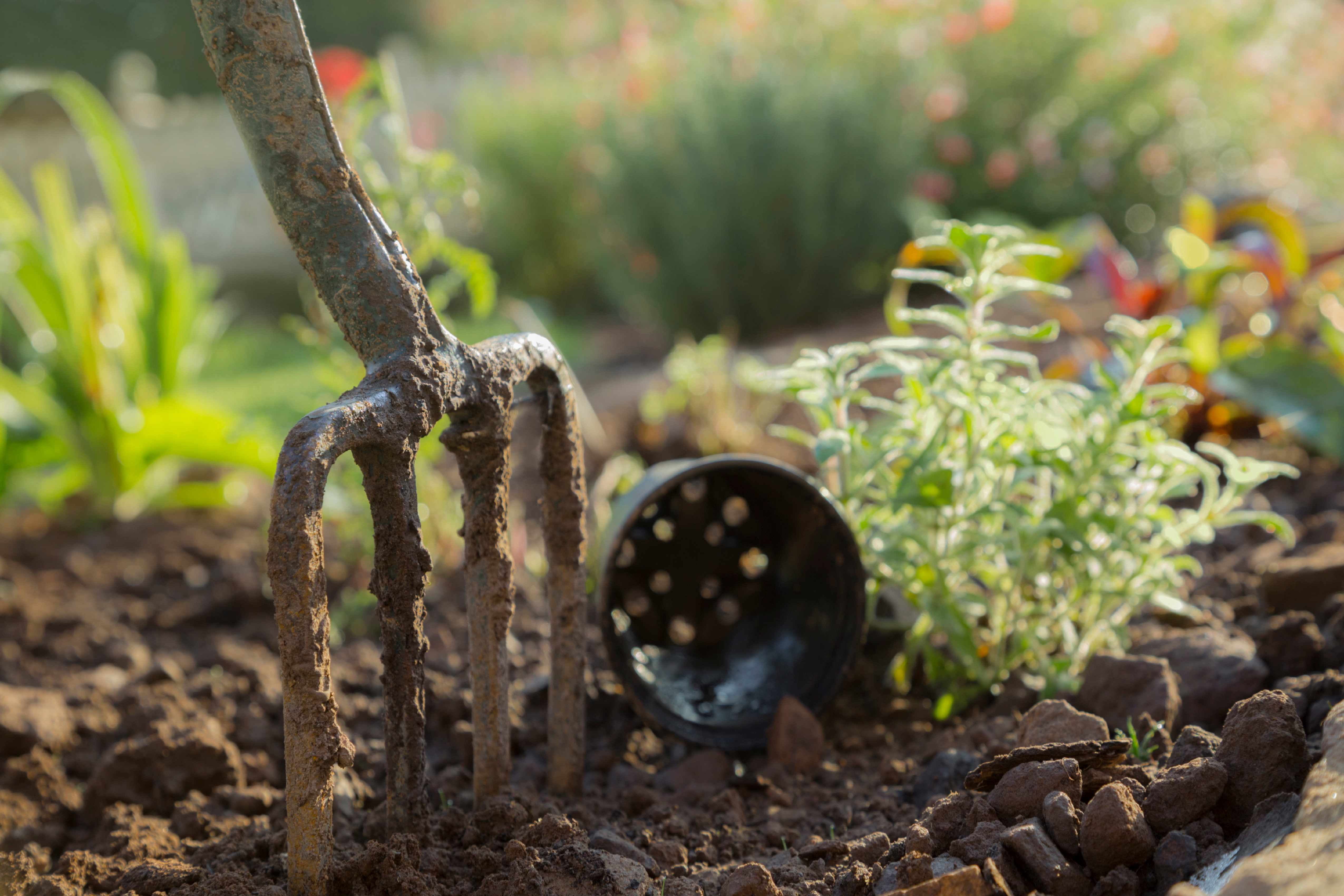 Garden fork in a flower bed. (Photo by: Loop Images/UIG via Getty Images)