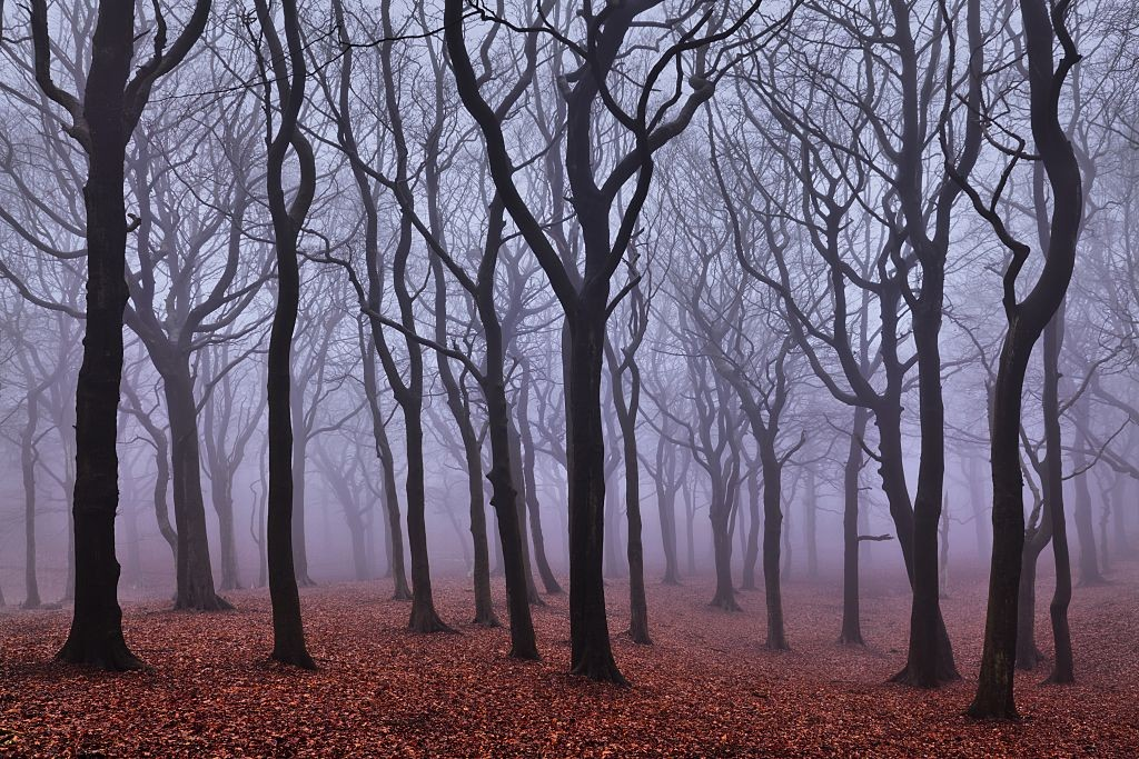 Mist hangs in Tandle Woods in Tandle Hill Country Park. (Photo by: Loop Images/UIG via Getty Images)