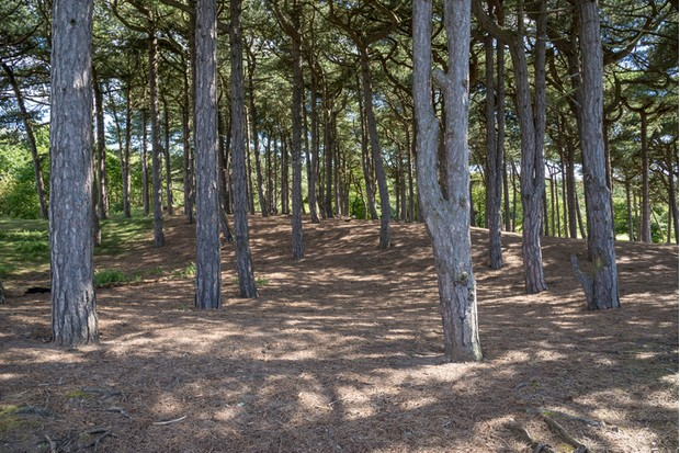 An important habitat for red squirrels on the coast of Northwest England. The forest has a trail for visitors.