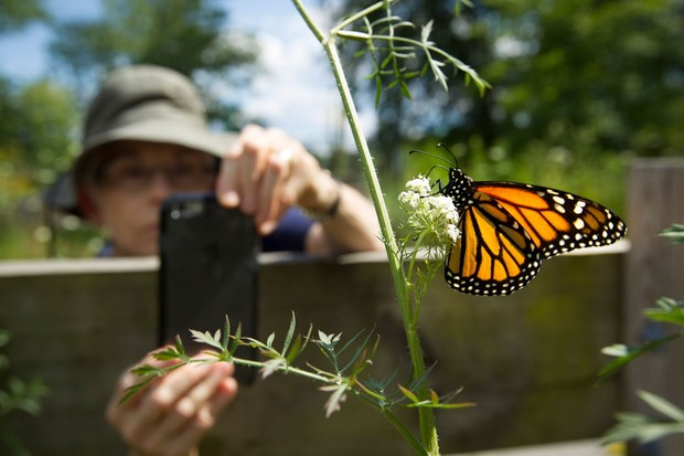Man taking a photo of a butterfly