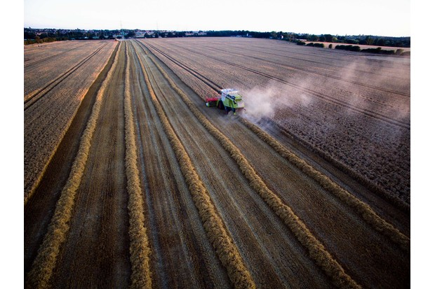 A Lexion 660 combine harvester, manufactured by Claas KGaA, left, harvests Crusoe wheat at Bentley Hall Farm in Wickford, U.K., on Monday, Aug. 15, 2016. U.K. wheat and barley exports are set to beat government forecasts for the season that ended in June as a weaker pound and higher corn prices make the country's overseas sales of the grains more competitive. Photographer: Carl Fox/Bloomberg via Getty Images