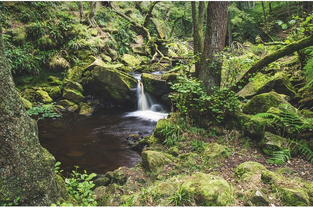 Derwent Gorge in County Durham cuts through an ancient world of oak and moss