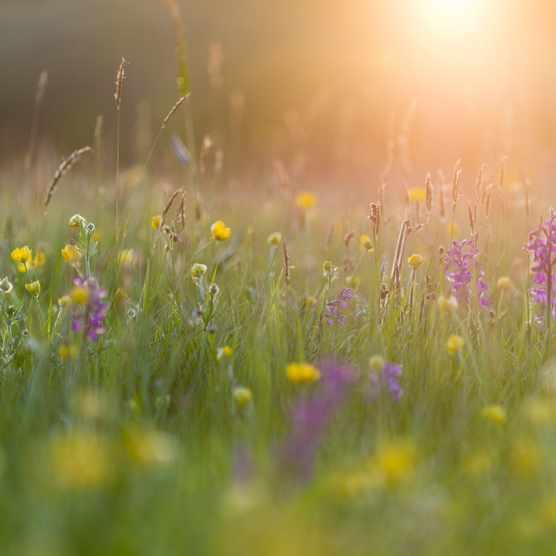Marden Meadow Nature Reserve, Kent, England, United Kingdom, Europe