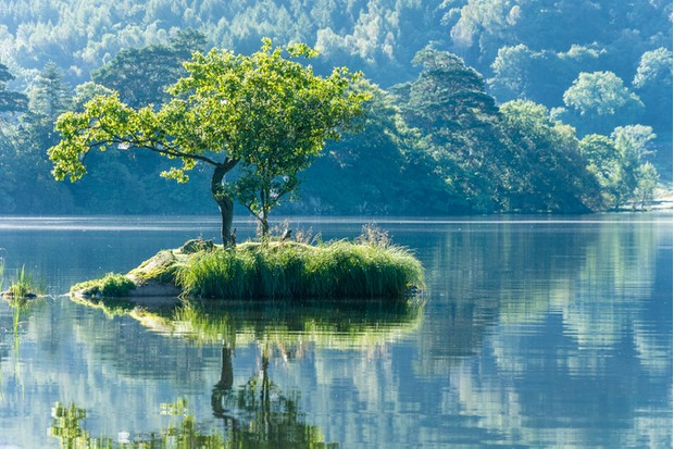 A lone Tree on a small island at Rydal water in the English Lake District.