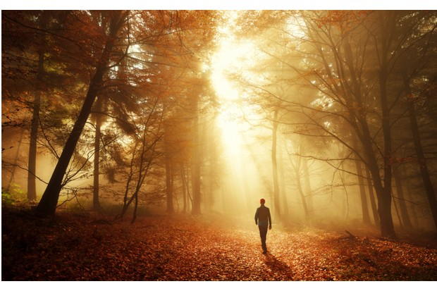 Male hiker walking into the bright gold rays of light in the autumn forest, landscape shot with amazing dramatic lighting mood