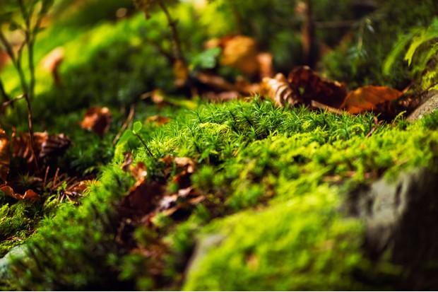 moss close up