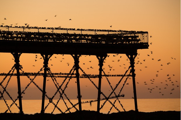 Starling murmuration around a pier.