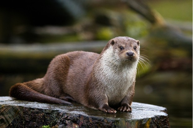 A picture from an otter.