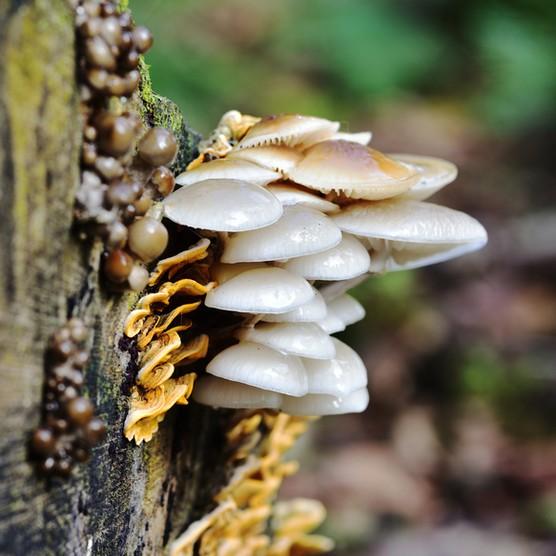 Sunlight on the Autumn Fruiting Fungi