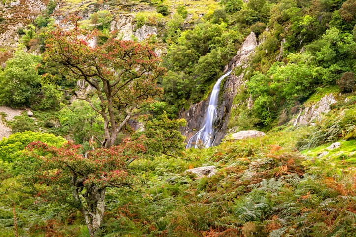View of Aber Falls in Showdonia National Park