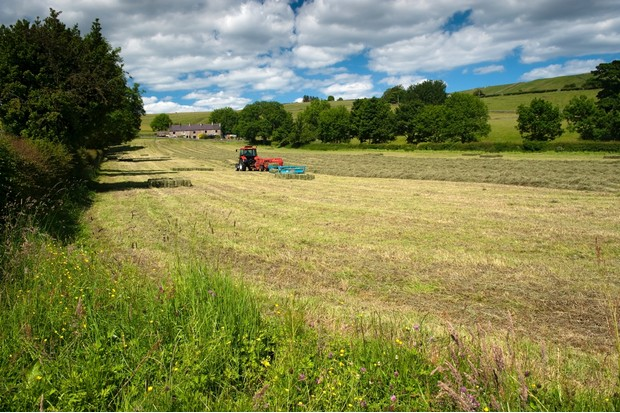 Strip of unmown grass around edge of traditiopnal dales hay meadow to help encourage wildlife.