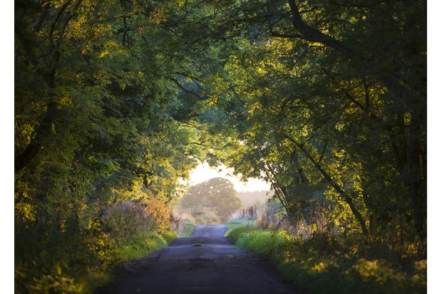 Well House, Harbottle, Northumberland, England, United Kingdom, September 14, 2016 : A scene of a tree archway across a farm lane in Autumn, copyright