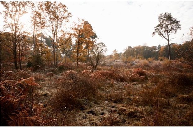 Burnham Beeches, UK - 7 November 2016: Autumn Trees And Bracken At Burnham Beeches In Buckinghamshire